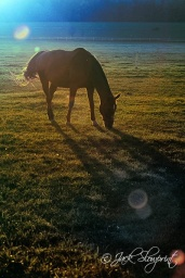 Horse in the Freezing Sun